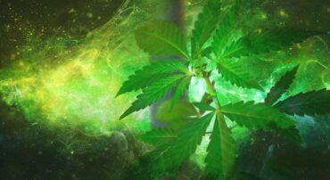 Legalizzazione cannabis nel mondo